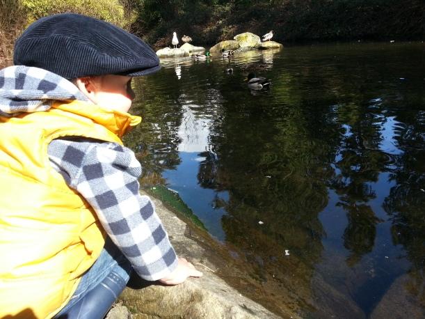 real ducks, quack quack, geese, wonderment